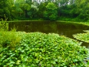The Pool of Peace - a pond created by a huge mine crater in Spanbroekmolen